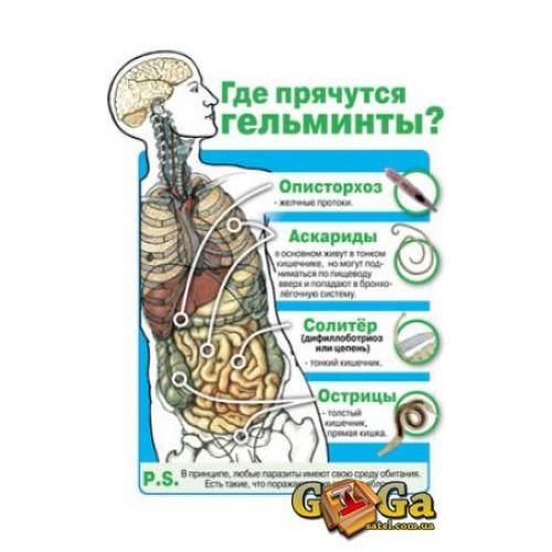 диагностика паразитов в организме человека в спб